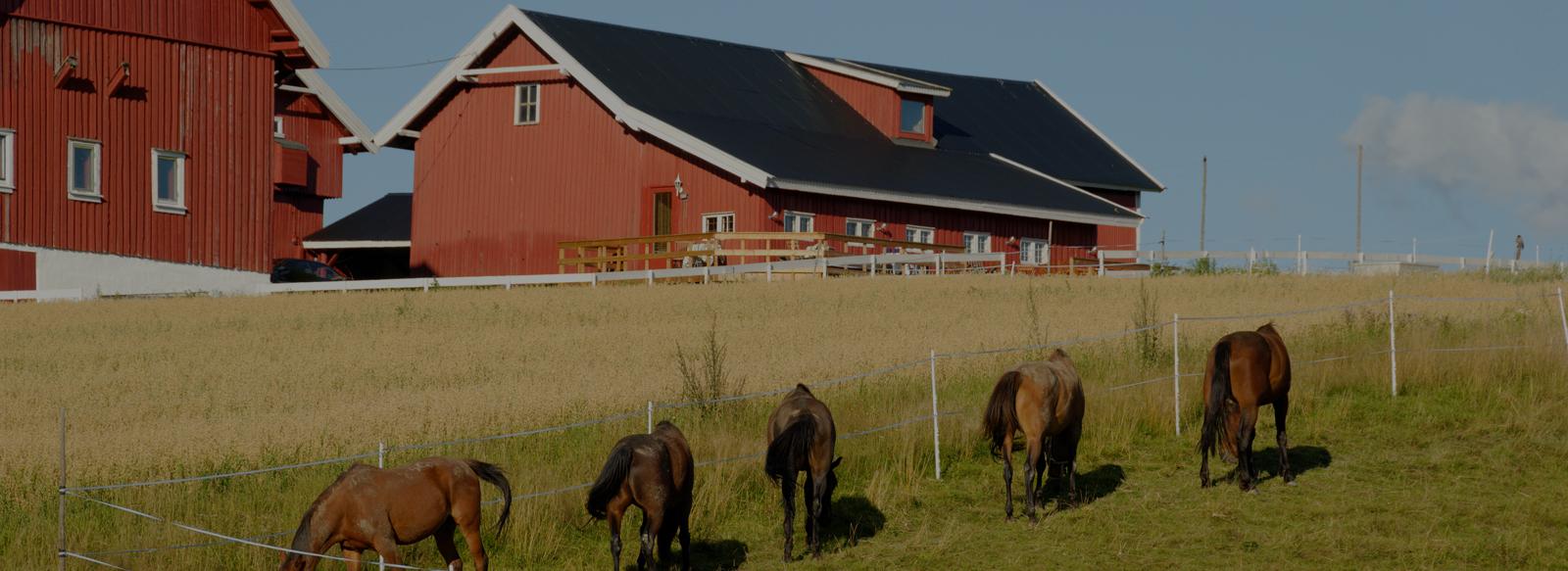 Spécialiste de l'Immobilier Equestre